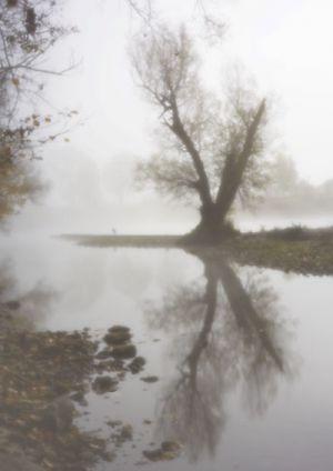 7759 Limmat-Aue Nebel